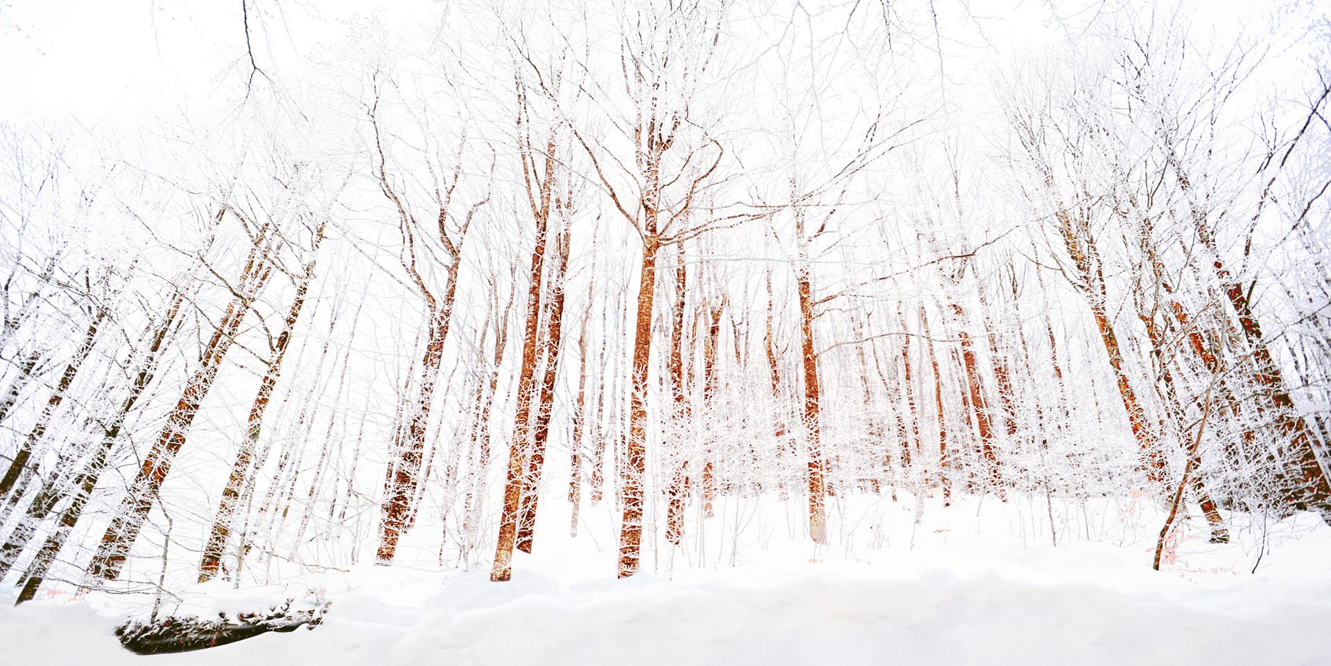 Faggi nelle neve